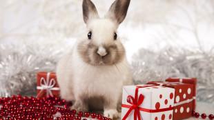 A legjobb karácsonyi ajándékötletek kisemlősöknek