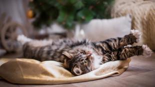 3 tipp, hogy a szilveszter cicádnak is kellemesen teljen: