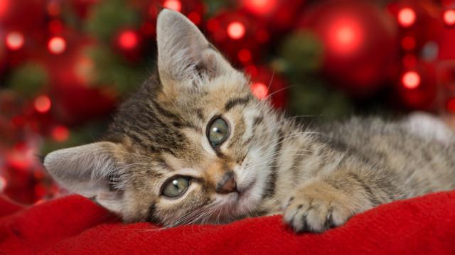 Kiscicák nagy álma: egy szerető család karácsonyra