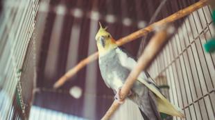 Fajtakalauz: kalitkatippek szárnyasoknak