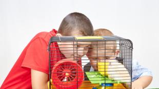 Melyik kisemlős illik hozzád a legjobban? Tudd meg cikkünkből!