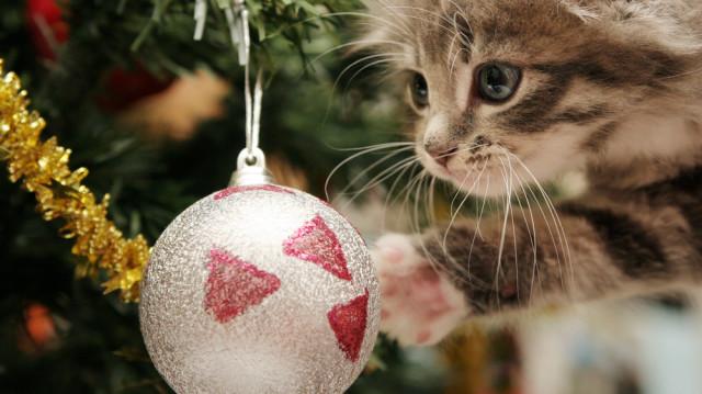 Cica + karácsonyfa, nem feltétlenül katasztrófa!