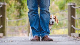 Honnan tudhatom, hogy kutyusom ideges?