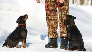 Mikor forduljunk kutyakiképzőhöz?