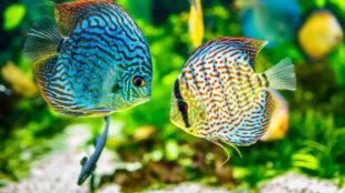 Farsangi színkavalkád az akváriumban