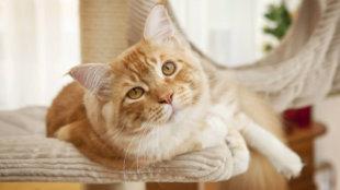A legjobb benti elfoglaltságok cicáknak