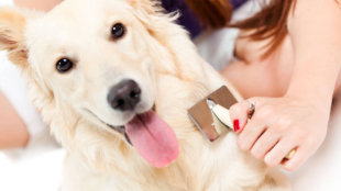 A legjobb szőrápolási tippek kutyusoknak