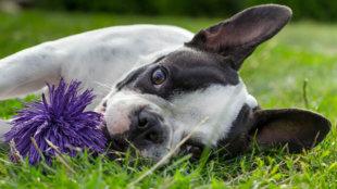 Kíváncsi kalandozás biztonságosan: tippek a kerti játékokhoz