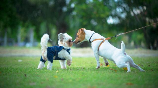 Kutyafuttató etikett, hogyan ismerkedjünk a többi bundás baráttal?