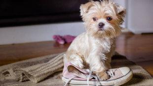 Kis kutya, nagy bajok – mikor kell közbelépni?