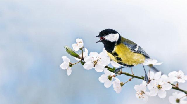 Új vendégeket hoz a tavasz: madárlesen a kertben