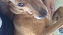 Valenta csupamosoly családi kutya