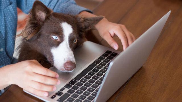 Mit tegyünk, ha új kutyát kell beszoktatni a munkahelyi falkába?