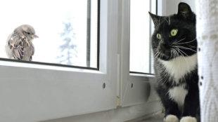 Hogyan szoktassuk le cicánkat a madárvadászatról?