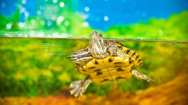 Beteg a teknős? Jelek, amikre jobb, ha odafigyel!