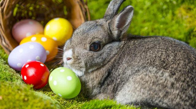 Húsvéti nyuszit ajándékba?