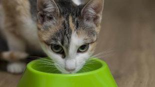 Mennyit igyon a cica?