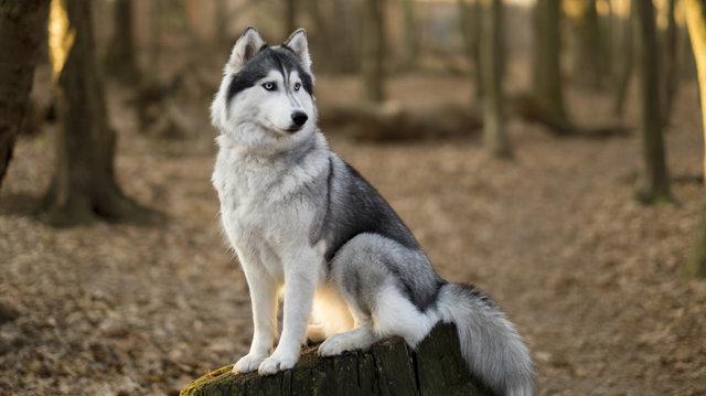 Hogyan válasszunk kutyafajtát?