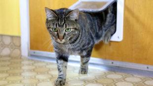 Milyen a tökéletes macskaajtó? Mutatjuk!
