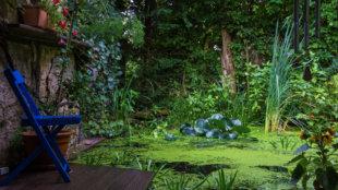 Itt a nyár: hogyan vigyázzunk kerti tavunkra?