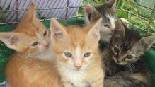 4 Vackolós macskakölyök