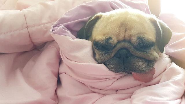 Kiszoktatnád kedvencedet az ágyból?