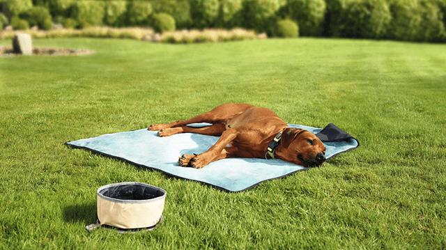 Feromonok: tényleg megnyugtatják a kutyákat?