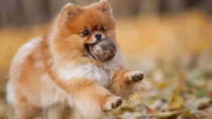 Hogyan szerettessük meg a labdázást kutyusunkkal?