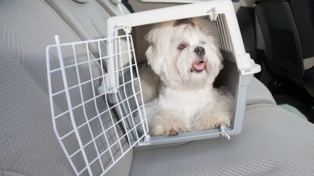 Kutyusok a kocsiban