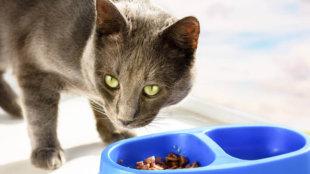 A legjobb nyári etetési tippek cicáknak!
