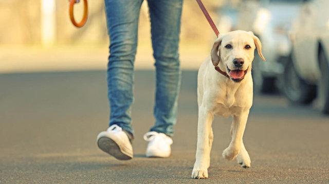 Városi kutyatartás, avagy, hogyan tanítsuk meg kedvencünknek, hogy ne szaladjon az útra