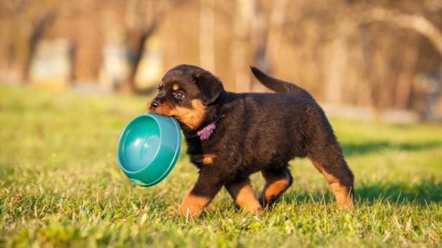 Nyári etetési tippek kutyáknak