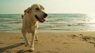 Csobbanjunk! Vízparti tippek kutyusoknak
