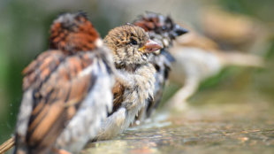 Nemcsak télen fontos: madáritatás kánikulában