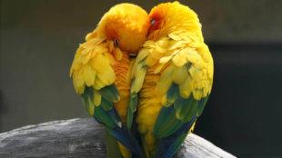 Minden madár társat választ – tollas barátaink párban szeretnek élni!