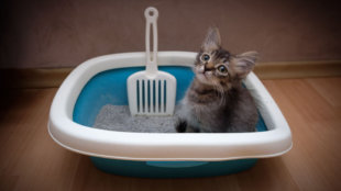 3+1 tipp a macskaalom higiéniájáért