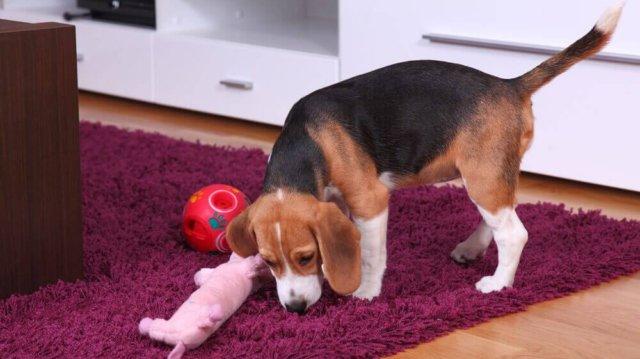 Gondolkodtató játékok kutyusoknak