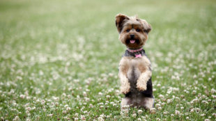 5 könnyen tanítható trükk kutyusoknak
