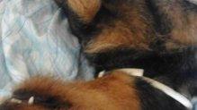 Géniusz szuper családi kutya