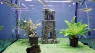 Fressnapf Aquakertészkedés