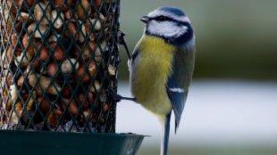 Készítsünk környezetbarát madáretetőt újrahasznosított anyagokból