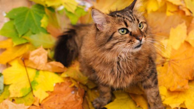 a cica látása gyenge