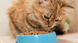 Gabonamentes étrend cicáknak