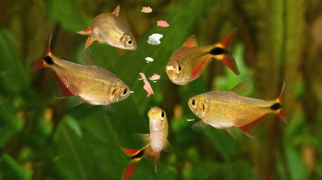 Túletetés: vigyázzunk halaink egészségére!