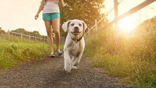 A kutyasétáltatás 5 aranyszabálya