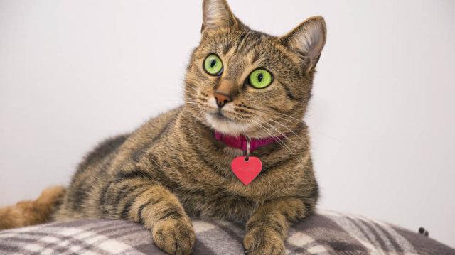 Hogyan válasszunk nyakörvet cicáknak?