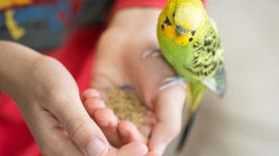 Gyermekek és apró szárnyasok: mire figyeljünk?