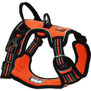 DogsCreek kutyahám Active narancssárga 69-81cm