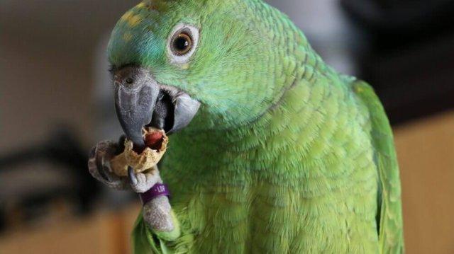 A hónap legjobb finomságai madaraknak