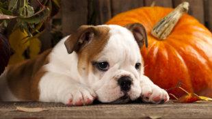 Mindenszentek és halloween: készítsük fel kedvencünket!